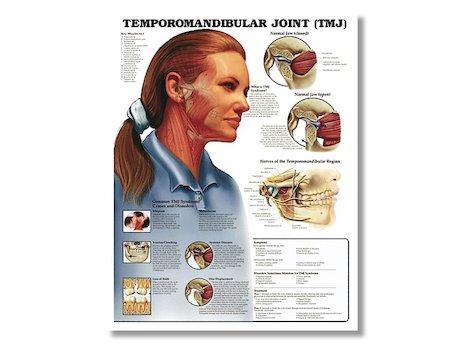 Anatomisk Afisch, Temporomandibular leden.