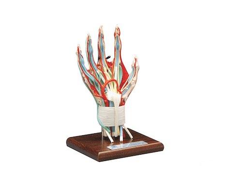 Deluxe hand och Vrist, modell.